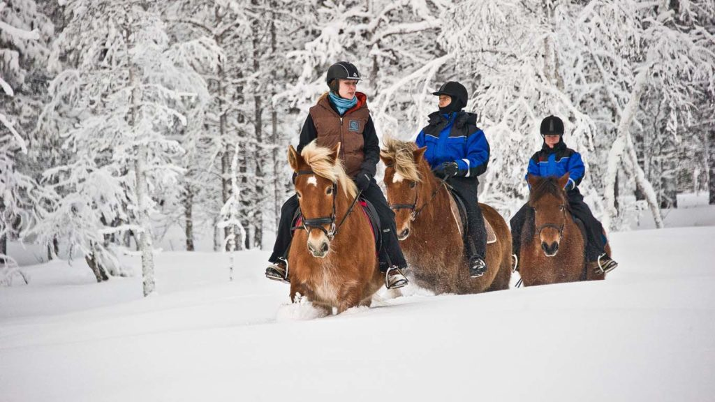 Horse drawn carriage and horse riding in winter